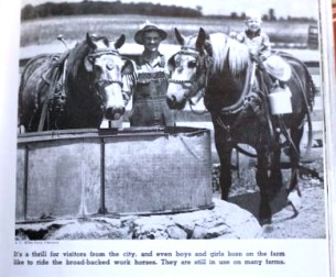 Photo of horses from Childcraft, volume seven